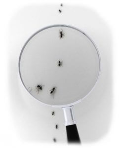 ants examined under magnifying glass