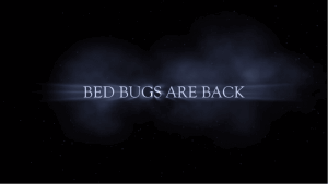bed bugs are back