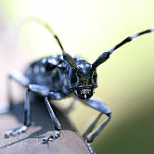 beetle image 250x150