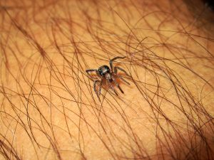 spider on hairy skin