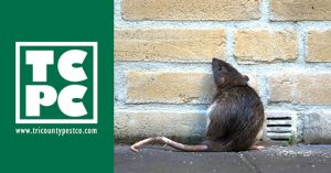 image of rat by brick wall with logo on left side