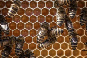 dozens of bees sitting on honeycomb