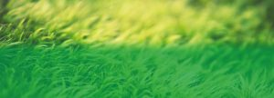 grass with a 50/50 green gradient overlay