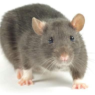 mouse button image